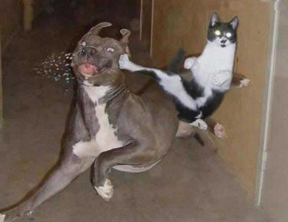 chat chien kungfu
