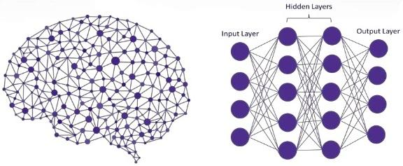neuronal network brain